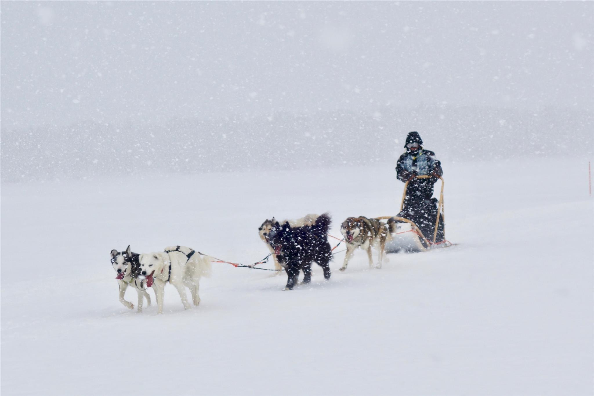 "Husky safari: ""viaggio into the wild"" Lapponia"