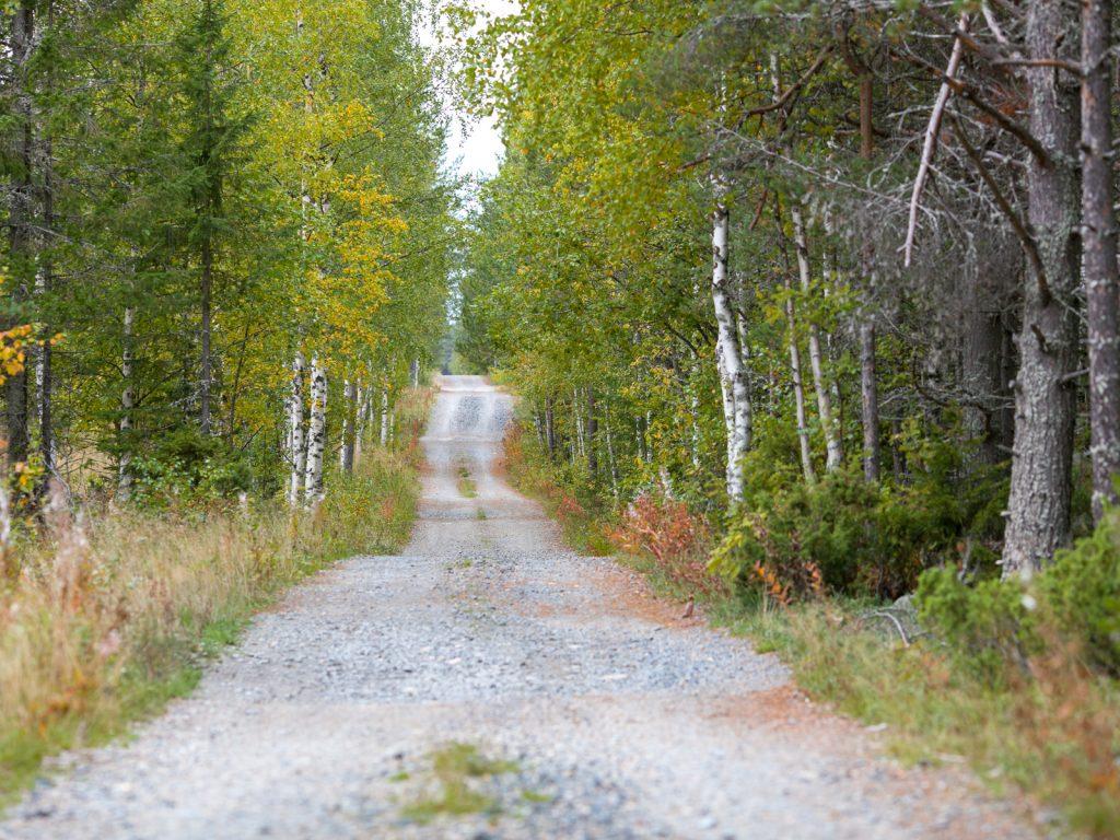 Lapponia_Finlandia_Svezia_Autunno_Foliage (13)