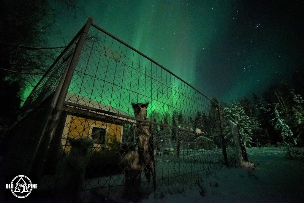 Northern Lights Miisa